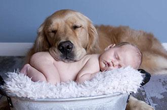 Курс для родителей - Ребенок и собака - все ответы на ваши вопросы